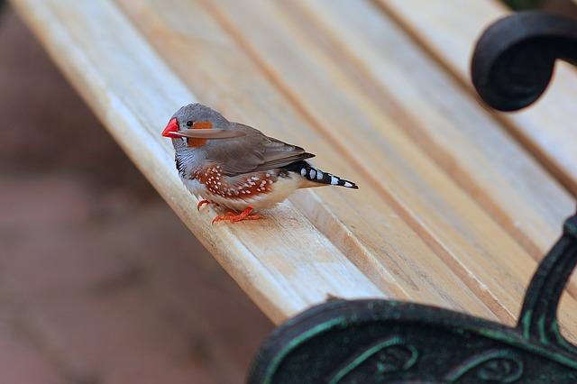 Aké vtáky sú ideálnymi rodičmi?