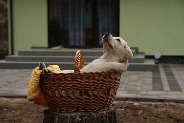 Ako si vytvoriť puto so svojim zachráneným psíkom