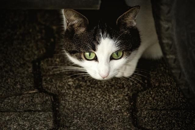 Pozor zlá mačka!