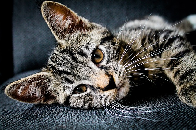 rozkošná kočka